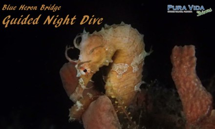 MAR 25: NIGHT DIVE AT BLUE HERON BRIDGE