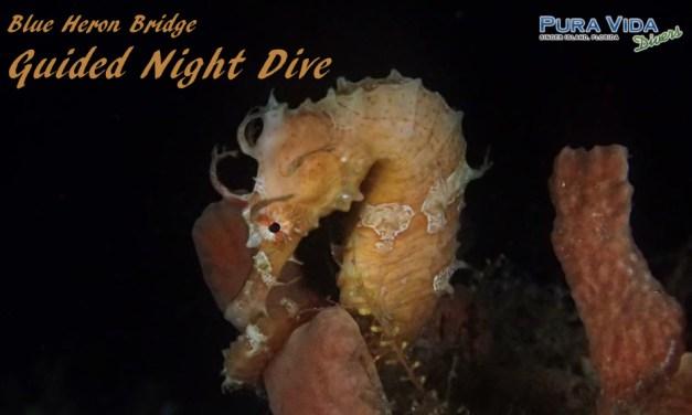 MAR 11: NIGHT DIVE AT BLUE HERON BRIDGE