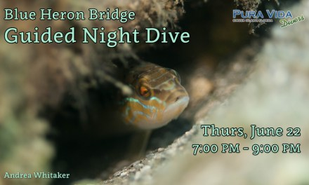 JUNE 22 NIGHT DIVE AT BLUE HERON BRIDGE