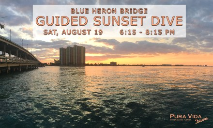 AUGUST 19 GUIDED SUNSET DIVE AT BLUE HERON BRIDGE