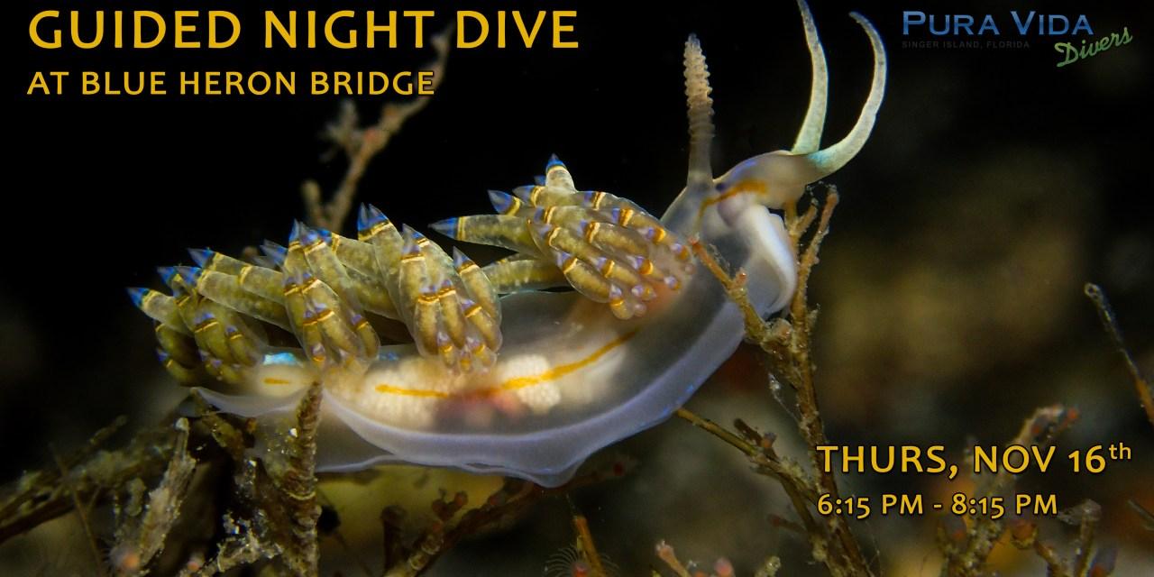 NOV 16: GUIDED NIGHT DIVE AT BLUE HERON BRIDGE