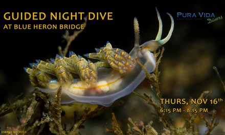 NOV 16: GUIDED NIGHT DIVE AT BLUE HERON BRIDGE