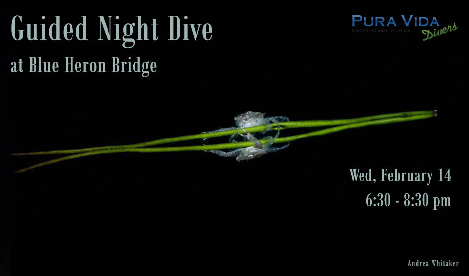 FEB 14: GUIDED NIGHT DIVE AT BLUE HERON BRIDGE