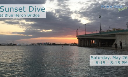 MAY 26: GUIDED SUNSET DIVE AT BLUE HERON BRIDGE