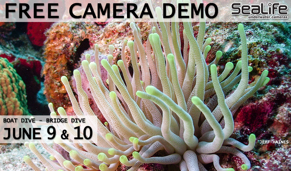 JUNE 9 & 10: SEALIFE CAMERA DEMO