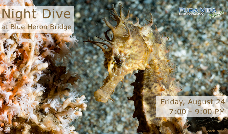 AUGUST 24: GUIDED NIGHT DIVE AT BLUE HERON BRIDGE