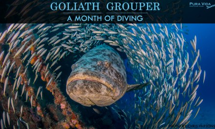 GOLIATH GROUPER AGGREGATION DIVES