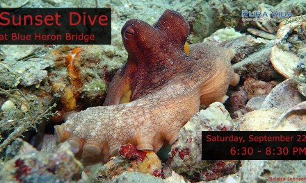 SEPT 22: GUIDED SUNSET DIVE AT BLUE HERON BRIDGE
