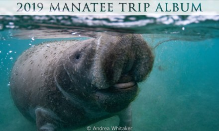 2019 Manatee Trip – Photo Album