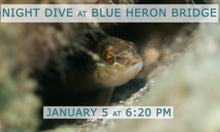 JAN 5: GUIDED NIGHT DIVE AT BLUE HERON BRIDGE
