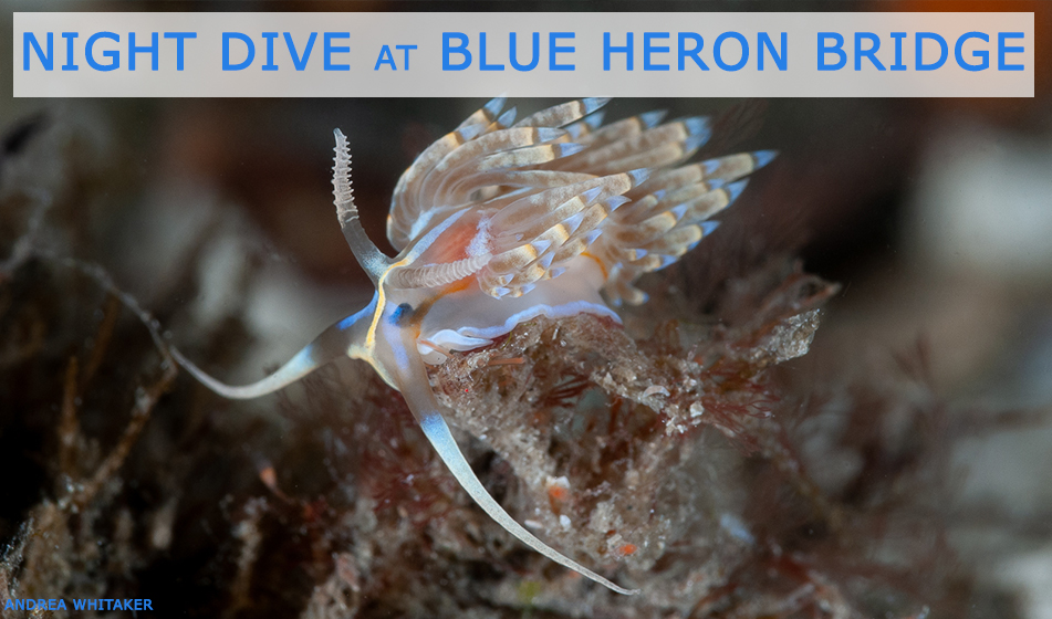 FEB 18: GUIDED NIGHT DIVE AT BLUE HERON BRIDGE