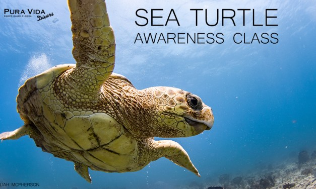 SEA TURTLE AWARENESS SPECIALTY