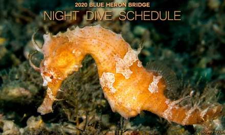 2020 BLUE HERON BRIDGE NIGHT DIVE SCHEDULE