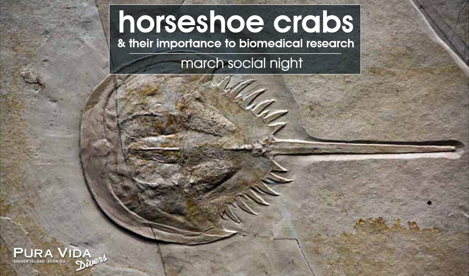 SOCIAL NIGHT: HORSESHOE CRABS