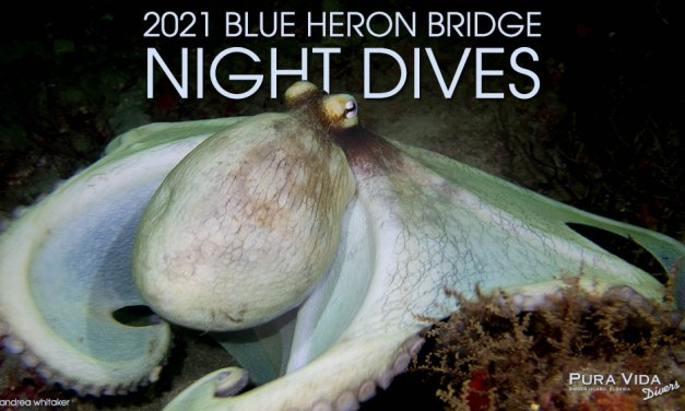 2021 BLUE HERON BRIDGE NIGHT DIVES