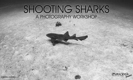 SHOOTING SHARKS PHOTO WORKSHOP