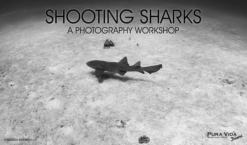 SHOOTING SHARKS PHOTO WORKSHOP