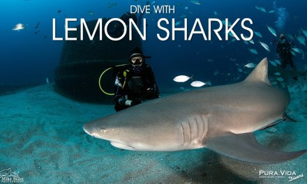 LEMON SHARK DIVE