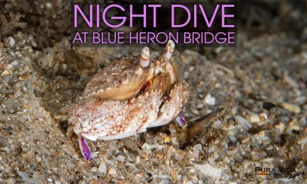 MARCH NIGHT DIVES