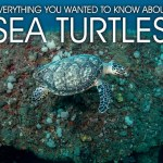 ALL ABOUT SEA TURTLES: Q&A WITH LOCAL EXPERT