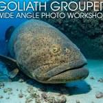 GOLIATH GROUPER WIDE ANGLE PHOTO WORKSHOP