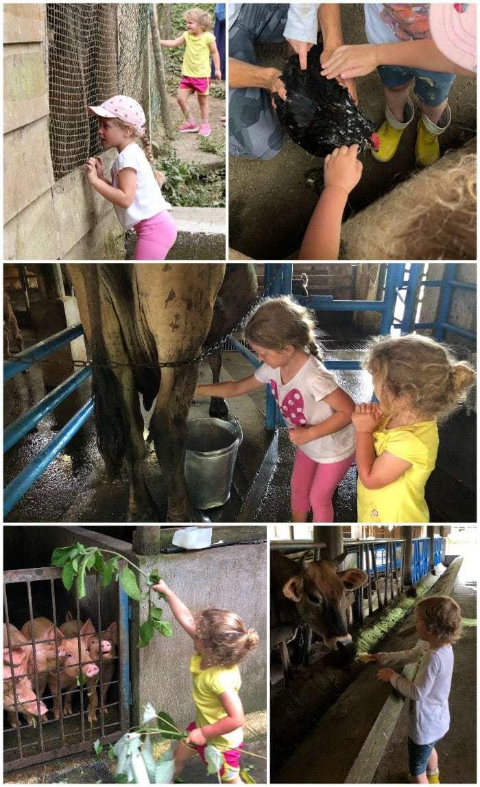 Farm Tour Rancho Margot Costa Rica