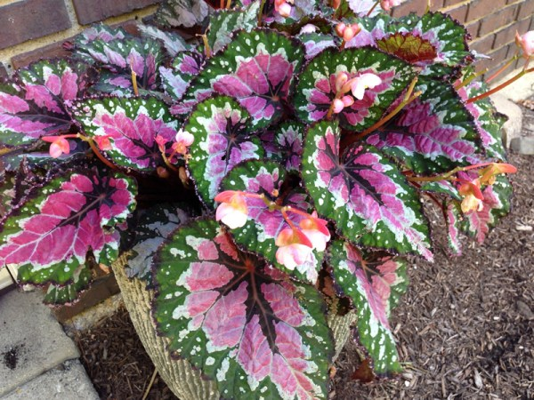 bringing houseplants indoors