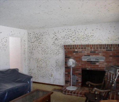 Home Mold Remediation Process