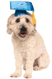 Graduation Training School Pet Dog Costume | eBay