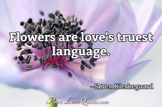 Falling Stars Live Wallpaper Flowers Are Love S Truest Language Purelovequotes