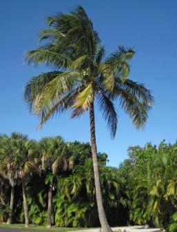 kokos olie biologisch