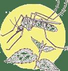 etherische olie bij insecten