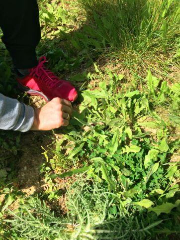 picking wild herbs
