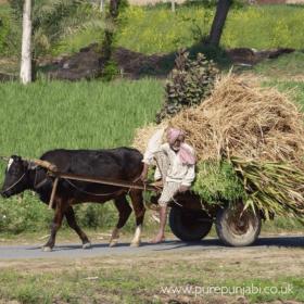 Rural Punjab