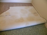 Dog Urine In Carpet
