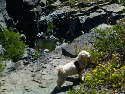 Passe Creek with Biggs