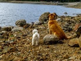 Dogs at the lake
