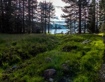 Jackson meadows