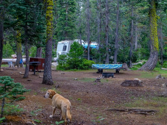 Loon Lake campsite