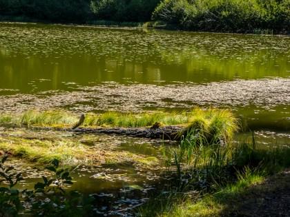 Feeley Lake Trail