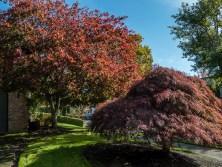 Oregon Autumn Leaves