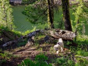 Charlie near Pass Creek