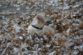 He loved the leaf piles