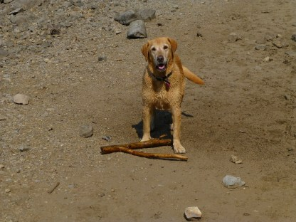 Ben loved to play, throw that stick