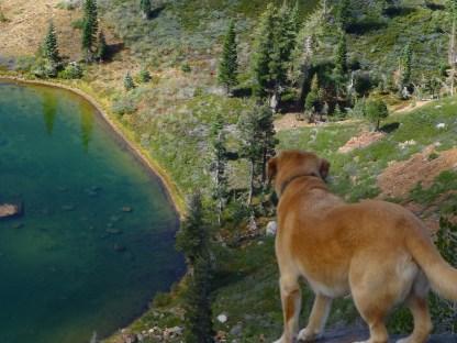 Above Culbertson Lake, Fall Creek Mtn