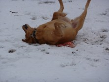frisbee and snow, love it!