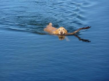 He loves to swim