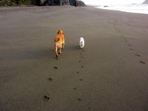 Two buddies wrights beach