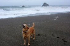 Smell the wind at Wrights beach