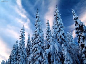 SnowCovered_Trees_Varmland_Sweden